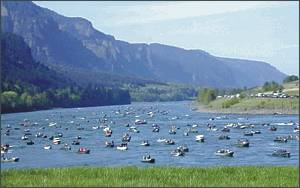 Below Bonneville Dam, recreational fishers were almost shoulder to shoulder in the spring of 2003, when one of the largest spring chinook runs on record returned from the ocean