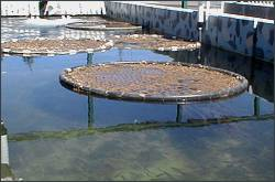 The program supports changes in traditional hatchery practices so that fish are raised in a more natural environment, like this raceway painted in camouflage colors. Click to enlarge.