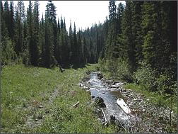 emery creek photo: after restoration