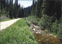 emery creek photo: before restoration
