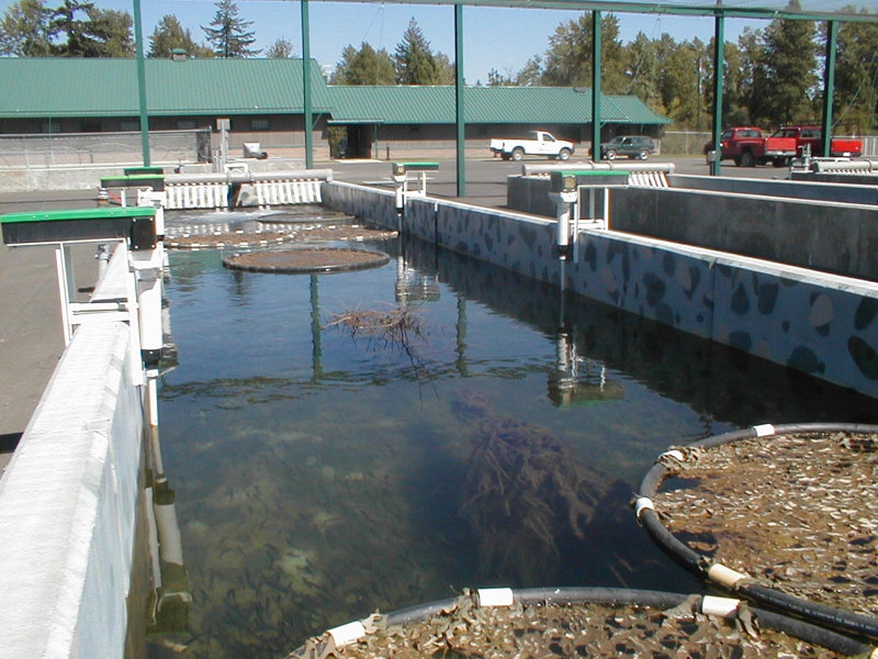 Hatcheries for Fish hatchery near me