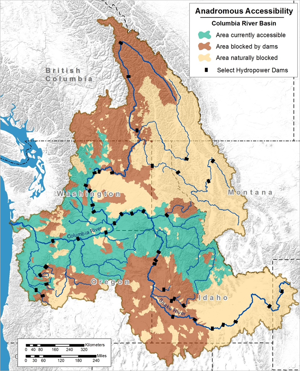Density dependence and its implications for fish for Columbia river fishing map