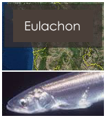 Click to view eulachon objectives