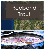 Click to view redband objectives