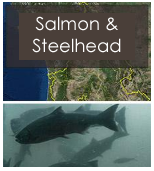 Click to view salmon and steelhead objectives