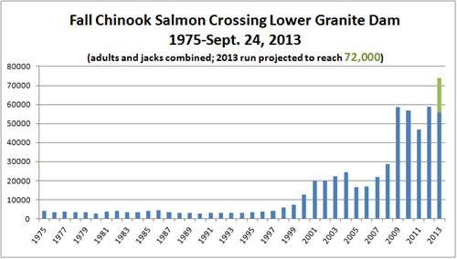 Fall Chin At Lower Granite