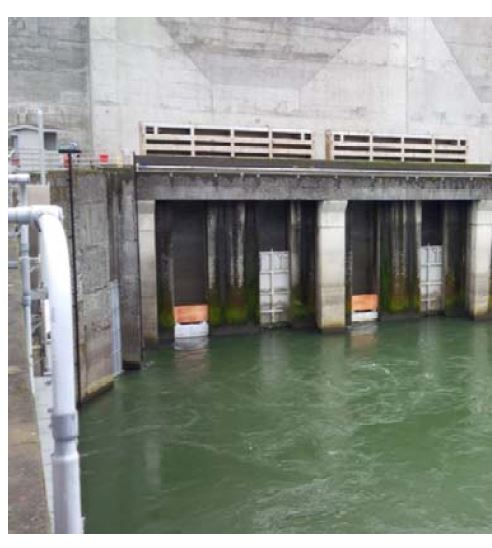 Wooden panels on the sea lion exclusion devices. Corps of Engineers photo.